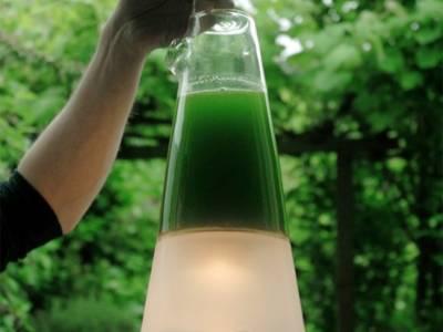 Algae Powered Lamp