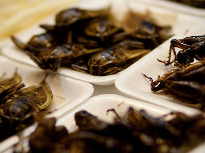 #EcoMonday tip 9: Eat Insects!