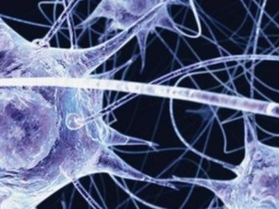 Carbon Microthread Connects Brain to Machine