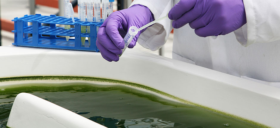 Those Algae Might Look Green...