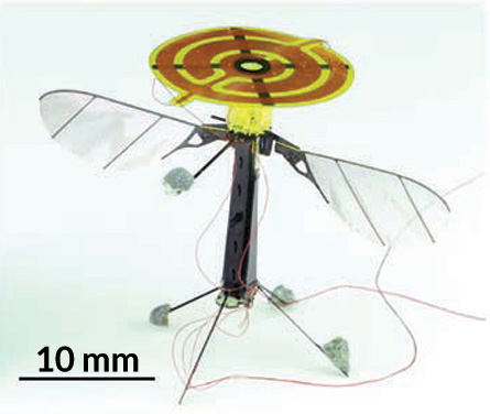 Robot insects land to take a break