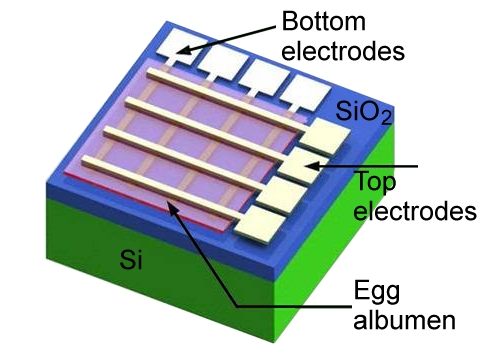 An electronic component partly made with egg proteins (credit: American Chemical Society)